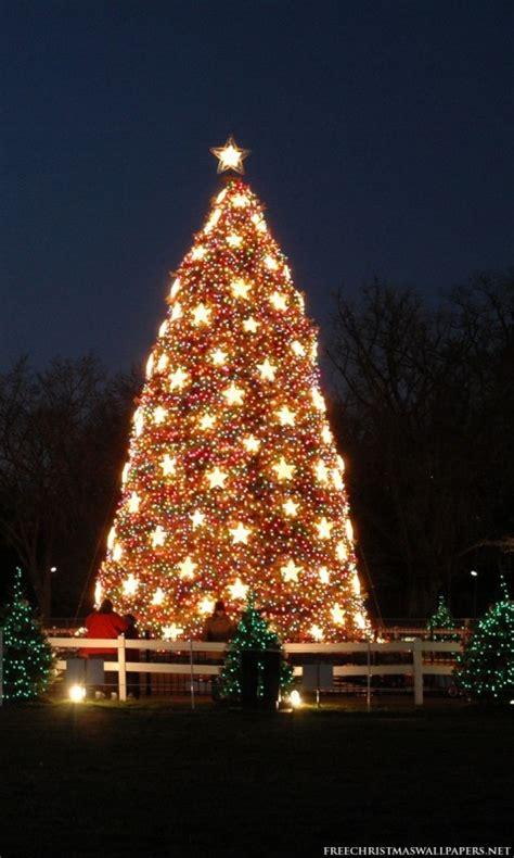 national christmas tree 480x800 wallpaper