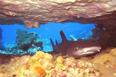 dive gili trawangan dive photos gili islands manta dive