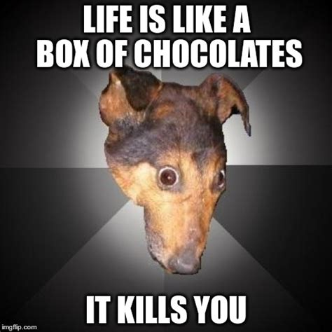 Life Is Like A Box Of Chocolates Meme - depression dog meme imgflip