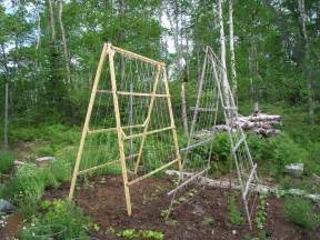 what is a trellis niki jabbour the year veggie gardener a frame