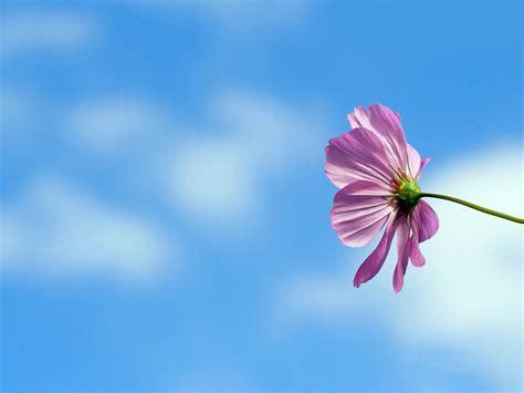 Permalink to All Flower Hd Wallpaper