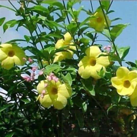 Pot Tray 50 Tempat Semai jual bibit unggul tanaman bunga lonceng bibit