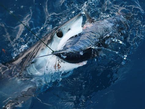 mako vs sea hunt boats 27 fear inducing images of the ocean activly page 9
