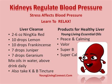 Pressure Points To Detox Your Blood by Living Essential Oils Blood Pressure Liver Cleanse