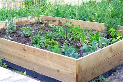 Raised Box Vegetable Garden Build A Simple Raised Vegetable Garden Box Raised Garden
