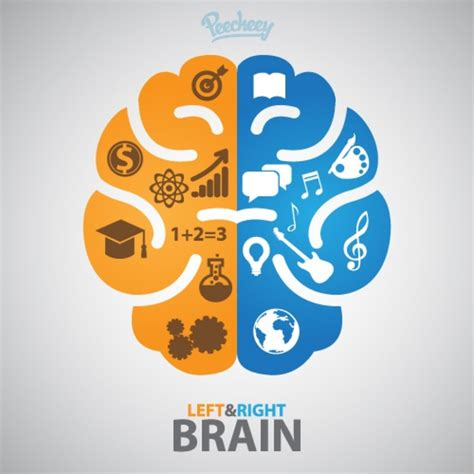 web design logo on right side left and right side of the brain free vector in adobe illustrator ai ai vector illustration