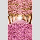 Spring Flower Backgrounds | 366 x 600 jpeg 130kB