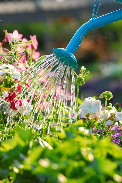 Garden Of H2o2 Hydrogen Peroxide Uses In Garden You Should