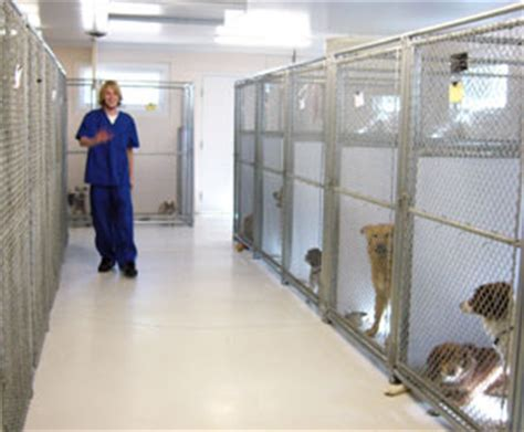 dog house daycare dog boarding animal hospital of the rockies llc animal house boarding estes