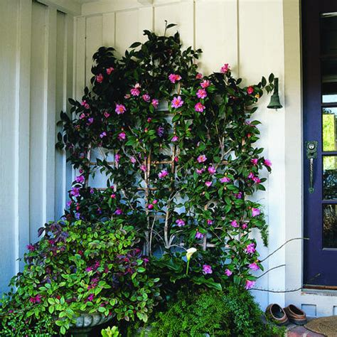 Magazinecustomerservice by Sasanqua Camellias Sunset