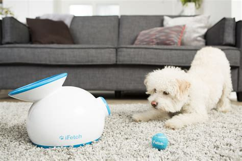 when do puppies balls drop tips dropping the in the funnel ifetch pet automatic