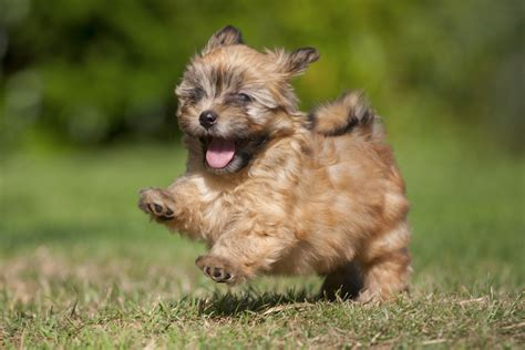 small dog breeds    cutest creatures