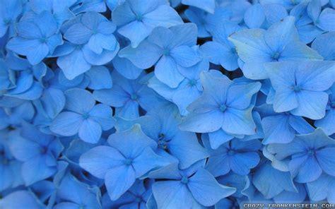 wallpaper flower tumblr blue blue flower wallpapers wallpaper cave