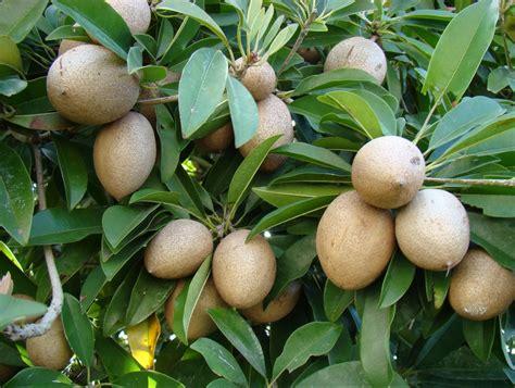 Salep Hd экзотические фрукты обзор