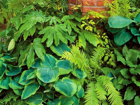 outdoor plants that don t need sunlight 45 best images about plants flowers that don t need sun