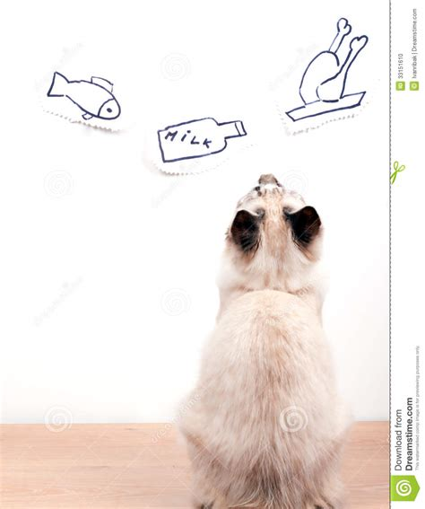 Cat Dreams Of Fish Birds Milk by Hungry Cat Is Dreaming About Stock Photo