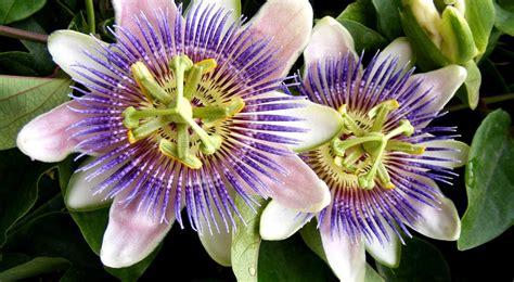 imagenes de flores de cempasúchil 16 flores hermosas para regalar y sorprender a una mujer