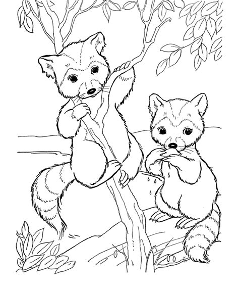 wildlife coloring pages coloring pages of animals coloring home