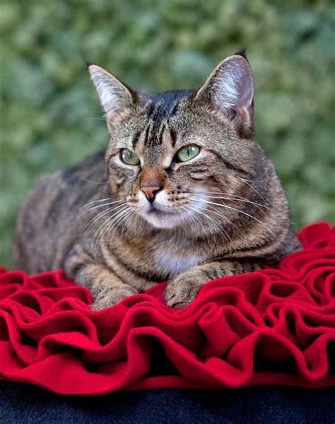 cuscino per gatti cuscini per gatti perfetto design e materiali d alta qualit 225