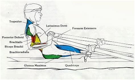 rowing machine diagram exercise equipment using a rowing machine for abdominal
