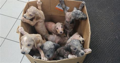 box of puppies a box of puppies abandoned on a busy highway hang on to