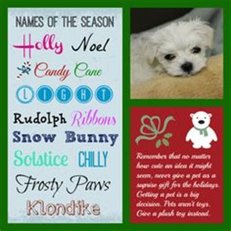 puppy themed names 1000 images about names on pinterest kitten names