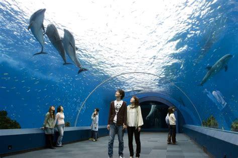 japanese aquarium all pakistan sites bigest aquarium in japan