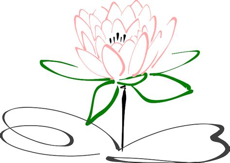 vector graphic lotus flower blossom plant