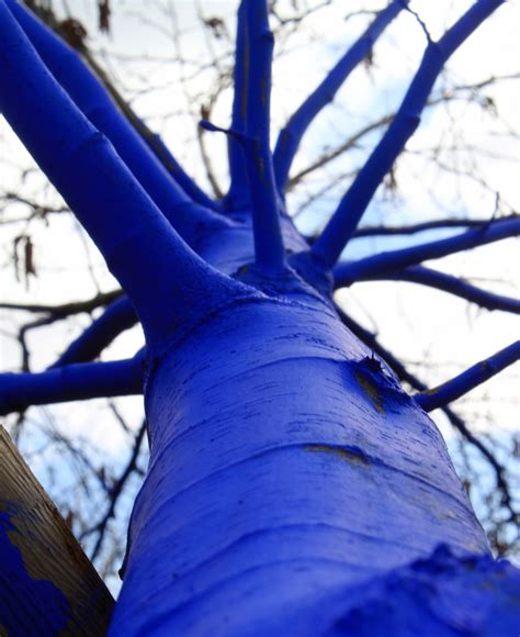 blue trees the blue trees breckcreate