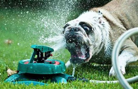 dogs  sprinklers modern dog magazine