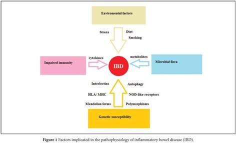 pattern recognition receptor inflammatory bowel disease inflammatory bowel disease recent advances on genetics