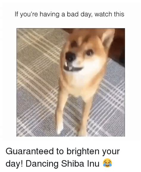 Meme Shiba Inu - funny shiba memes of 2017 on sizzle dogee