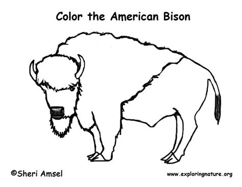 Bison Face Coloring Coloring Pages Bison Coloring Pages