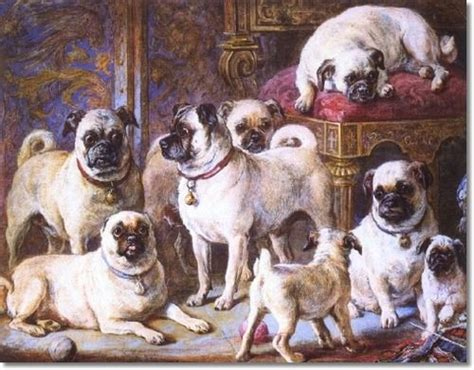 of pugs called s pugs about pug