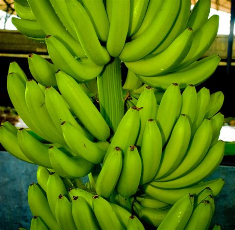 The Bananas our for fruit bananas fyffes