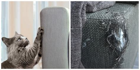sofa that cats won t scratch does your cat always scratch your sofa this is how you