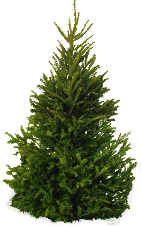 natural artificial christmas trees