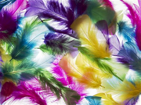 colored feathers colored feathers jigsaw puzzle in puzzle of the day