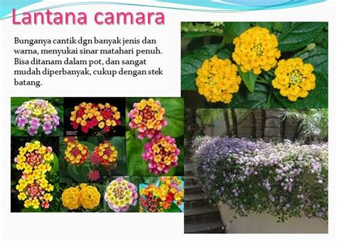 contoh taman tropis