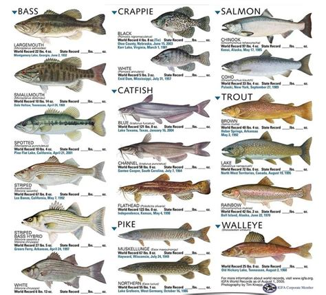 images freshwater fish freshwater fish  zoomanchoo