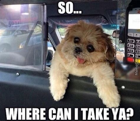 Taxi Meme - taxi driving dog nuff said by epicdragonmaster meme center