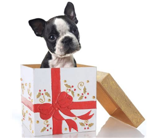 puppy present s day rescue gifts