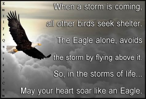 storm of eagles the quotes about eagles and shelter quotesgram