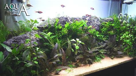 Tutorial Aquascape by Aquascaping Lab Tutorial Planted Aquarium