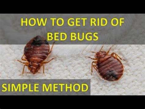 how to get rid of bed bugs how to get rid of bed bugs with out salt permanently fast and easily youtube
