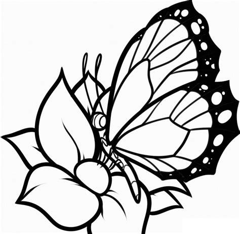 imagenes en blanco para colorear de flores galer 237 a de im 225 genes dibujos de mariposas para colorear