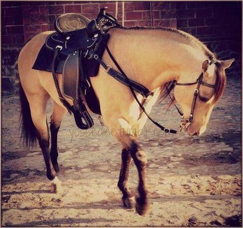 fotos de vaqueros a caballo caballo rancho pinterest horse and animal