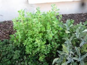 Rock Garden Herbs Herbs A Rock Garden