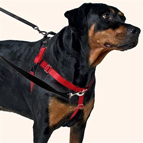 freedom no pull harness freedom no pull harness package with leash teal medium 1 quot wide price