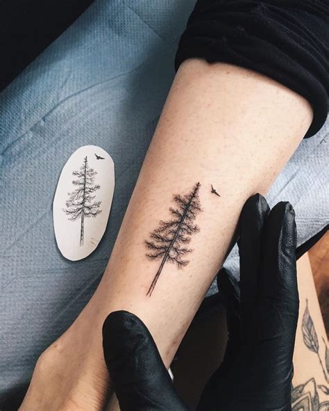 best 25 pine ideas on ponderosa pine cone www pixshark images